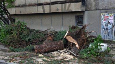 Паднали клони и скъсани жици причини силният вятър в Стара Загора
