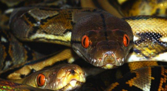 Нов случай на ухапан от змия в Пловдивско
