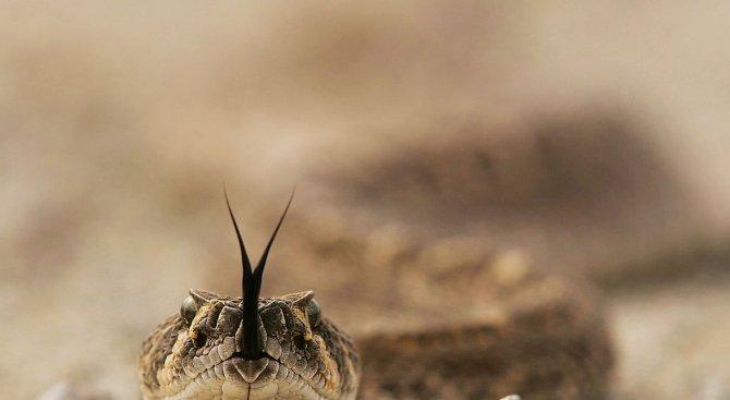 Змия пропълзя в училищен двор в Смолян