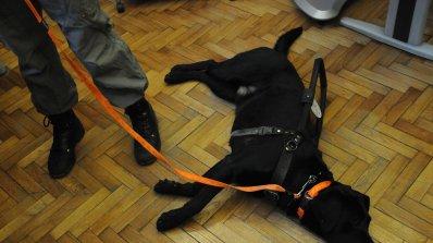 Започват проверки за домашните кучета в Перник
