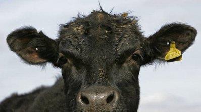 Петли и крави тормозят новите селяни в България