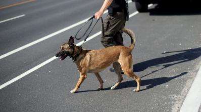 Законопроект предвижда затвор за боеве с кучета в Русия