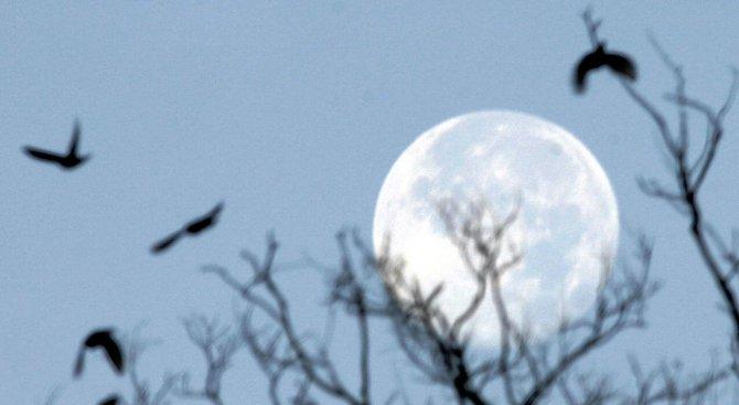 Природозащитници ще наблюдават нощната миграция на птиците