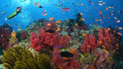 Официално: Големият бариерен риф е мъртъв