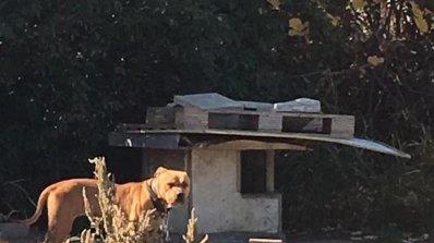 Незаконна дейност, свързана с боеве на кучета, разкриха в Пловдив (снимки)