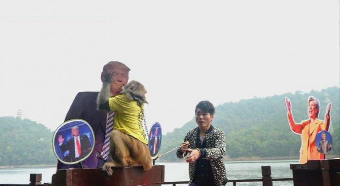 Маймуна пророк посочи Тръмп за президент на САЩ