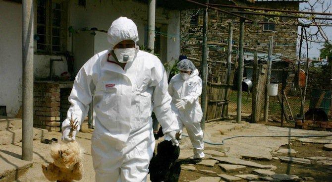 БАБХ: Констатираните огнища на Инфлуенца по птиците вече са 26, в 9 области на страната