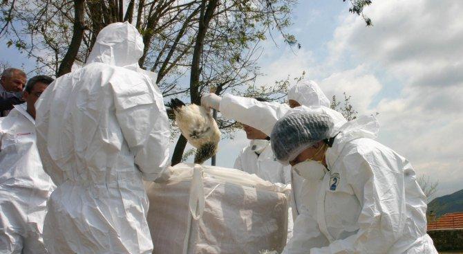 Второ огнище на птичи грип в Бургаско