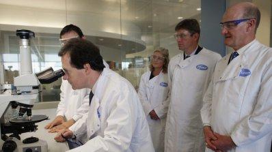 Учени отгледаха панкреас от стволови клетки