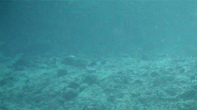 Учени откриха древно подводно свлачище в Австралия