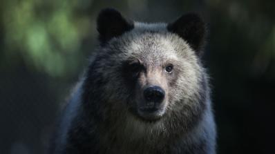 Мъж, нападнат от мечка, осъди държавата