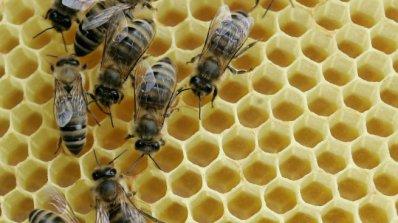 40% от пчелите в Пловдивско измряха от студ и отрови