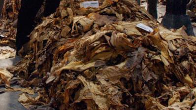 Спипаха 17-годишен от Златитрап с 20 торби контрабанден тютюн