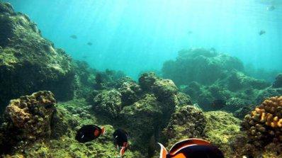 Деби причини щети и върху Големия бариерен риф