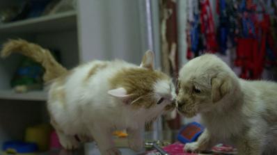 Забраниха яденето на кучета и котки в Тайван