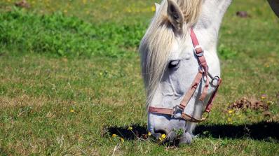 Застреляха кобила, пасла в чужда нива
