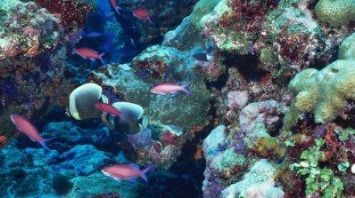Колко струва Големият бариерен риф?