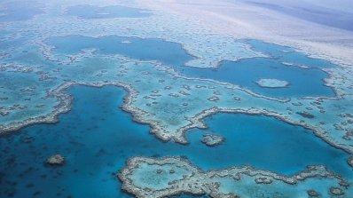 Големият бариерен риф не е сред застрашените обекти в списъка на ЮНЕСКО