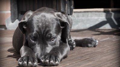 Нарастват сигналите за жестокост над животни у нас