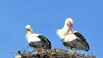 Село Баня - 72 минерални извора и 34 щъркелови гнезда