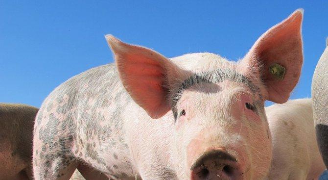 Пресякоха нелегален внос на над 20 тона свинско месо
