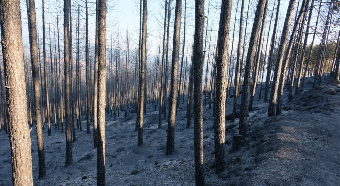 7 къщи изгоряха край селата Стара Кресна и Ощава при пожара в Кресненското дефиле