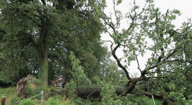 Най-малко трима души са загинали от бурята Себастиан в Германия