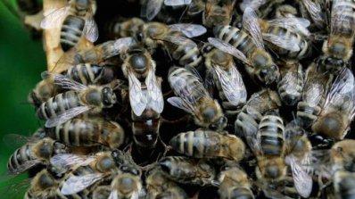 Пчеларите получиха над 3 млн. лева по Национална програма