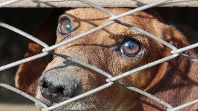 Пореден случай на насилие над животни. Мъж отглежда над 300 кучета при ужасни условия (видео)