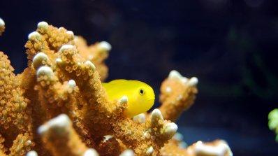 Учени успешно трансплантираха корал