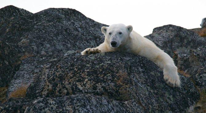 Земята може да се затопли с 15 процента до 2100 г.