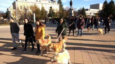 Собственици на кучета протестираха в Силистра (снимки)