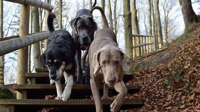 Рязък ръст на посегателствата срещу животни