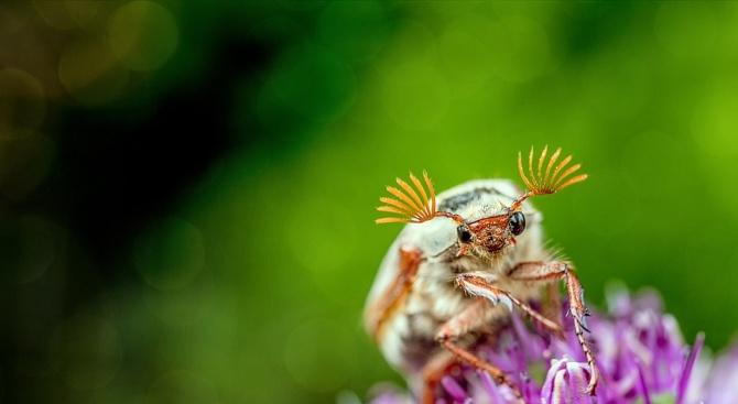 """Учен кръсти бръмбари с имената на дракони от """"Игра на тронове"""""""