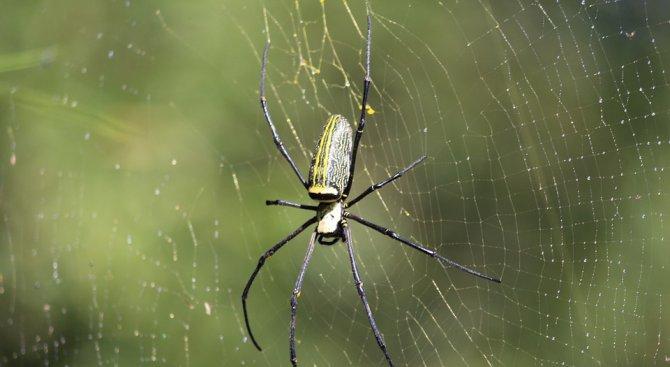 Американец подпали дома си заради паяк