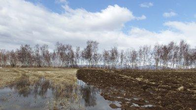 Есенниците в Търговищка област са в добро състояние, въпреки липсата на снежна покривка