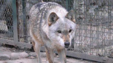Животните в Хасковския зоопарк също мизерстват