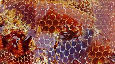 Плевен е домакин на международно пчеларско изложение с гости от 22 държави