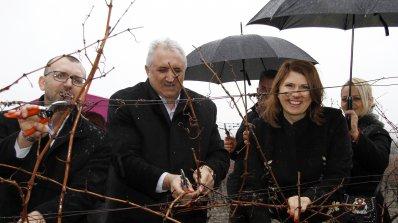 """С мавруд от земята на Маркели """"Винпром Карнобат"""" възражда старите български сортове"""
