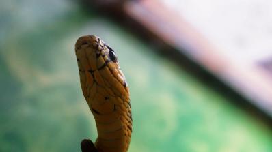 Полицията откри 200 змии в апартамент в Буенос Айрес