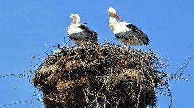 Нови платформи за щъркелови гнезда се монтираха в Пловдивско