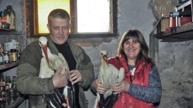 Семейство в Силистренско ще прави щъркелови гнезда (снимки)