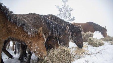 Собственикът на зарязаните коне в Осогово взел 34 700 лева субсидия