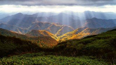 Растения мигрират към планински върхове заради климатичното затопляне