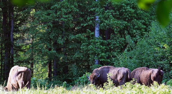 Полша наруши правото на ЕС в древна гора