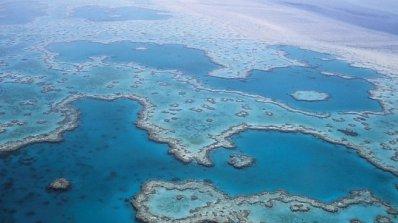 Австралия дава половин милиард долара, за да възстанови Големия бариерен риф