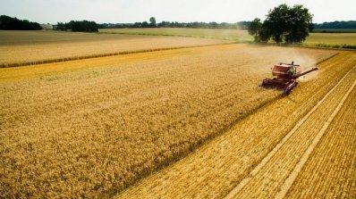 В много добро състояние са над 90 % от пшеницата и засетия ечемик в Силистренско