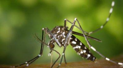 Община Лом започна пръскане срещу комари