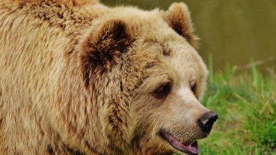 Паркът за танцуващи мечки край Белица остана без един от първите си обитатели
