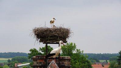 Сафет от Зарица прави гнезда за щъркелите, които спаси